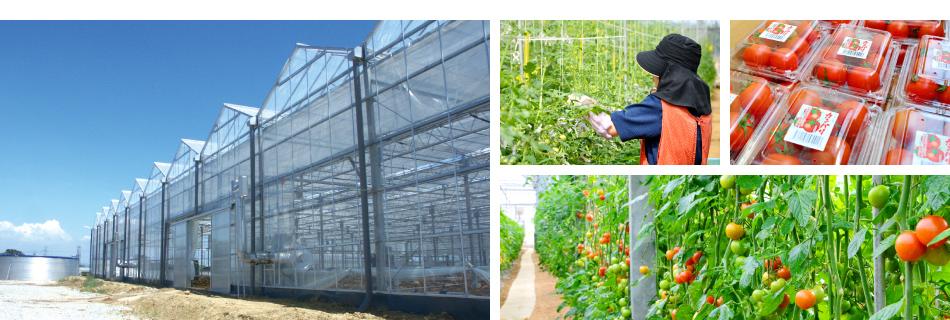 トマト事業